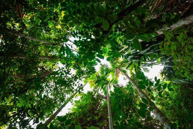 de palm van de bodemmening in wildernis en takken bos en milieuconcept royalty-vrije stock fotografie