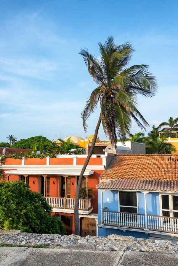 De Palm van Cartagena royalty-vrije stock foto's