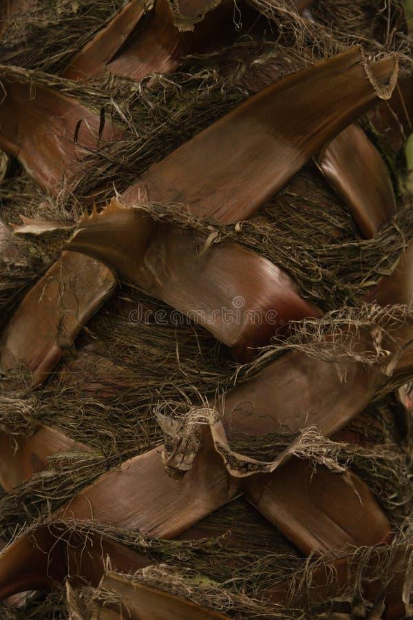 De palm van de boomstam royalty-vrije stock foto's