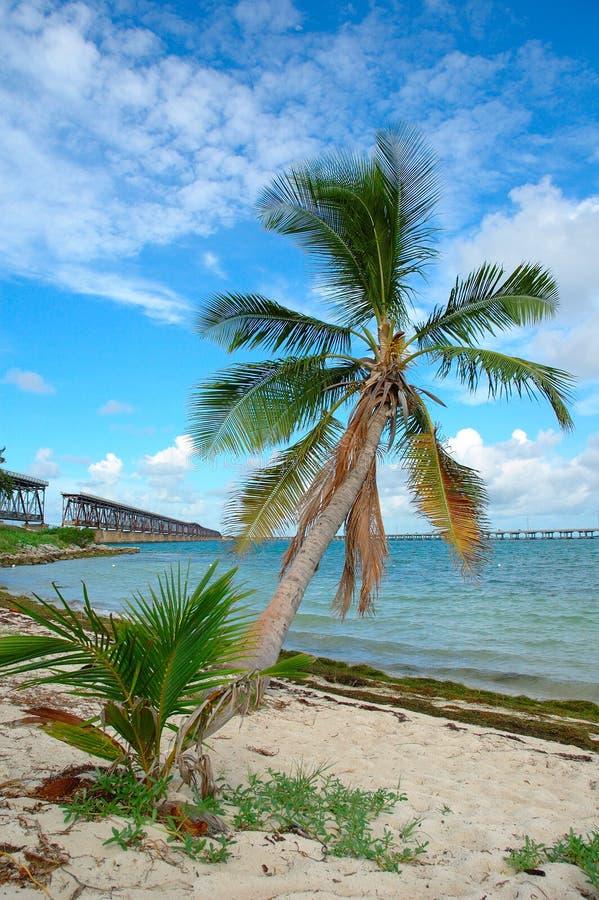 De Palm van de brug royalty-vrije stock afbeeldingen