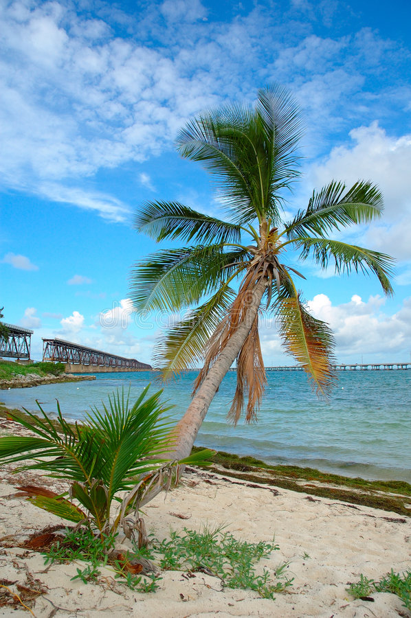 De Palm van de brug stock afbeeldingen