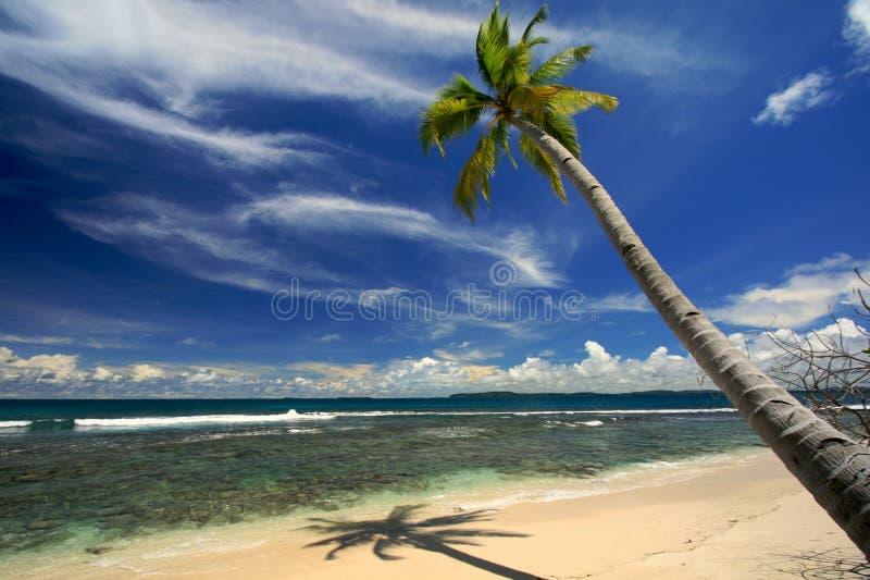 De palm van de kokosnoot op tropisch strand royalty-vrije stock foto