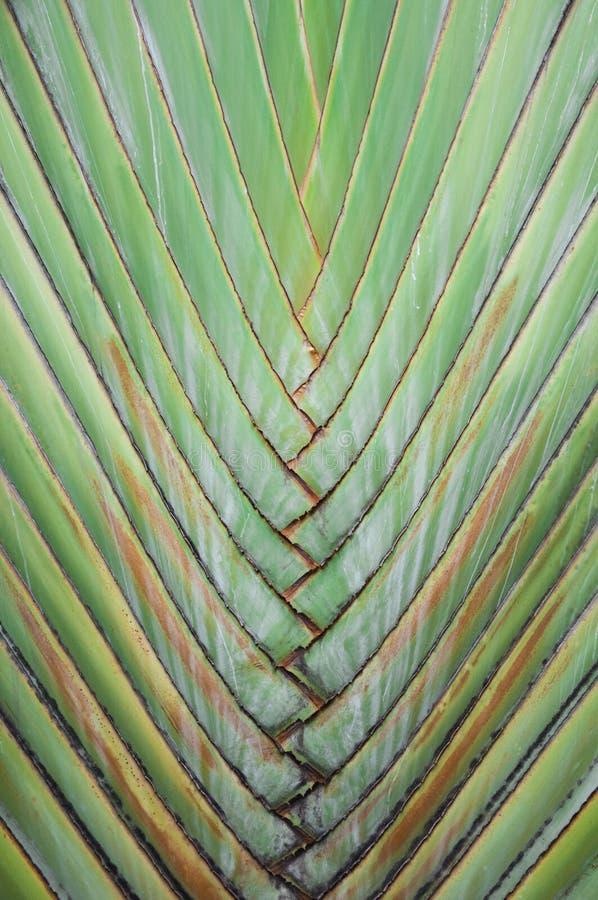De palm van de reiziger stock foto's