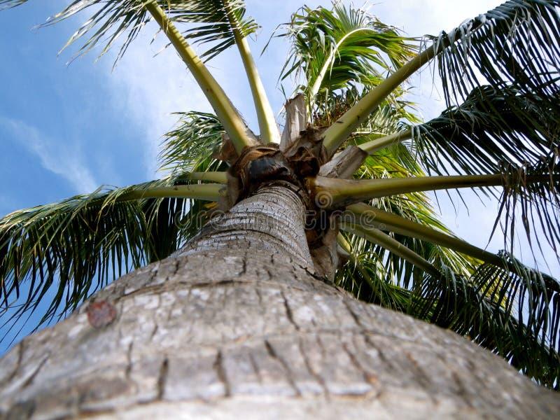 De Palm van Florida stock fotografie