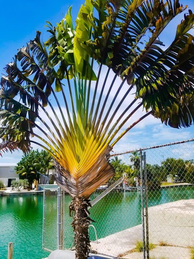 De Palm van de ventilator stock fotografie
