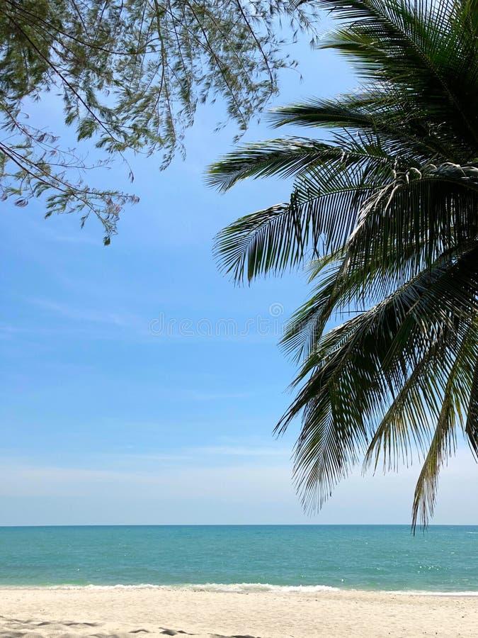 De palm vertakt zich en takken van een tropische boom tegen een blauwe hemel, een turkooise overzees en een wit zand stock fotografie