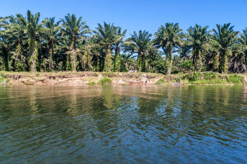 De palmaanplanting van de olie stock afbeeldingen
