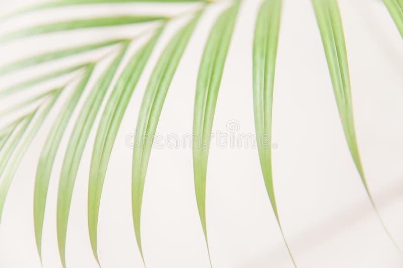 De palmbladen op witte achtergrond, helder en mooi zonlicht worden geïsoleerd, worden en zacht van tropisch blad dat zacht stock fotografie