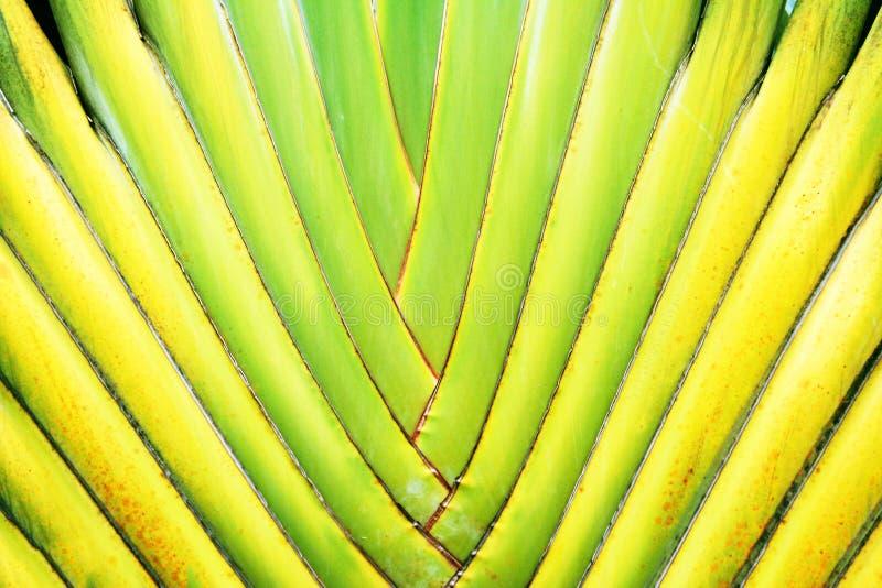 De palmbladenachtergrond van de reiziger, gevormde Ventilator royalty-vrije stock afbeeldingen