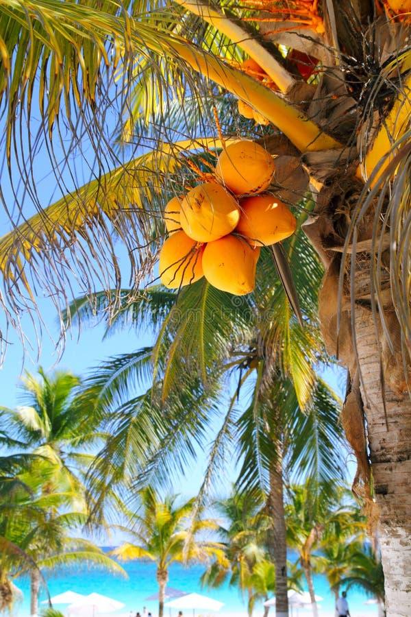 De palmen Caraïbisch tropisch strand van de kokosnoot stock afbeelding