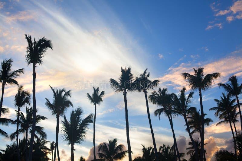 De palmen op blauwe hemelachtergrond, palmtakken op hemelachtergrond, silhouetten van palmen, bekroont palmenbomen stock foto