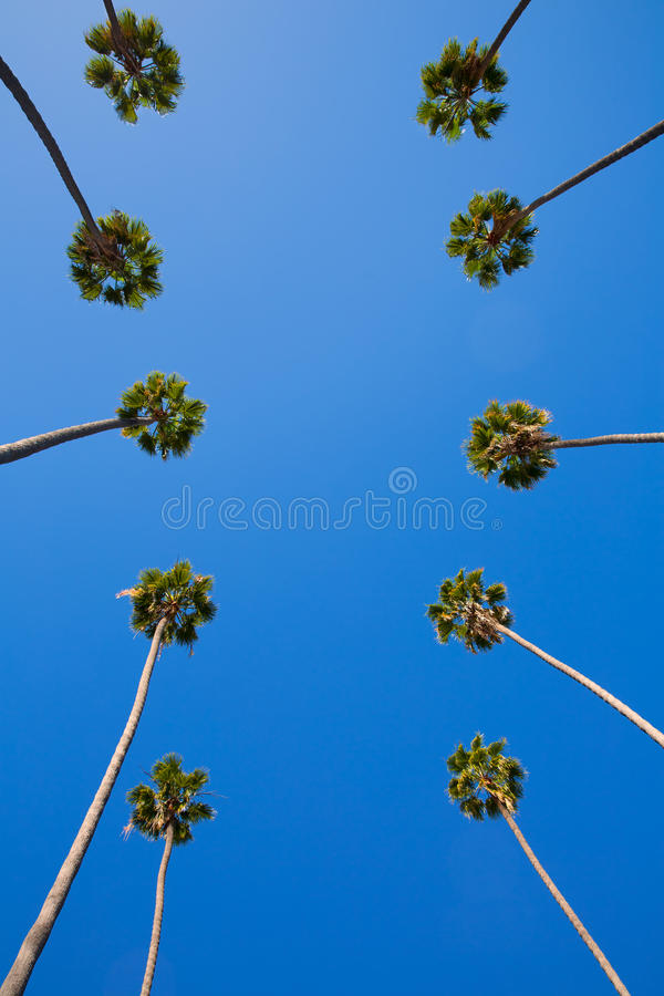 De palmen op een rij typisch Californië van La Los Angeles royalty-vrije stock foto's