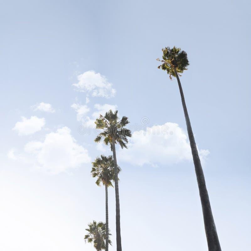 De palmen van Californi? op de blauwe hemel stock afbeeldingen