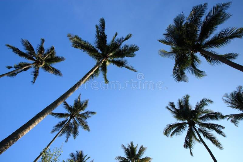 De palmen van de kokosnoot stock foto