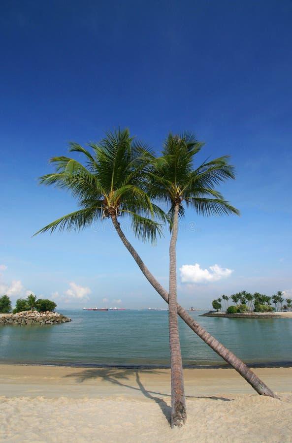 De palmen van de kokosnoot op strand stock fotografie