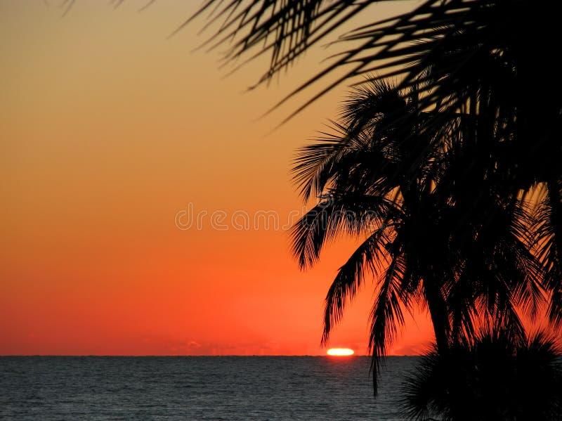 De palmen van de kust bij zonsondergang stock foto's