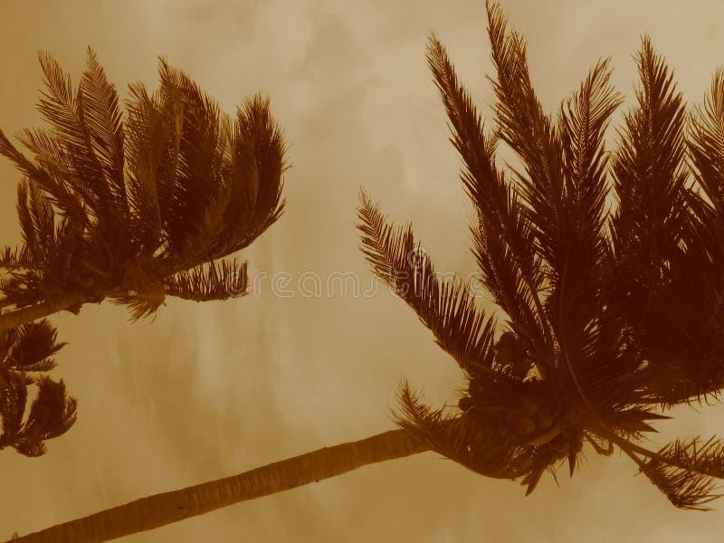 De Palmen van de orkaan stock foto's