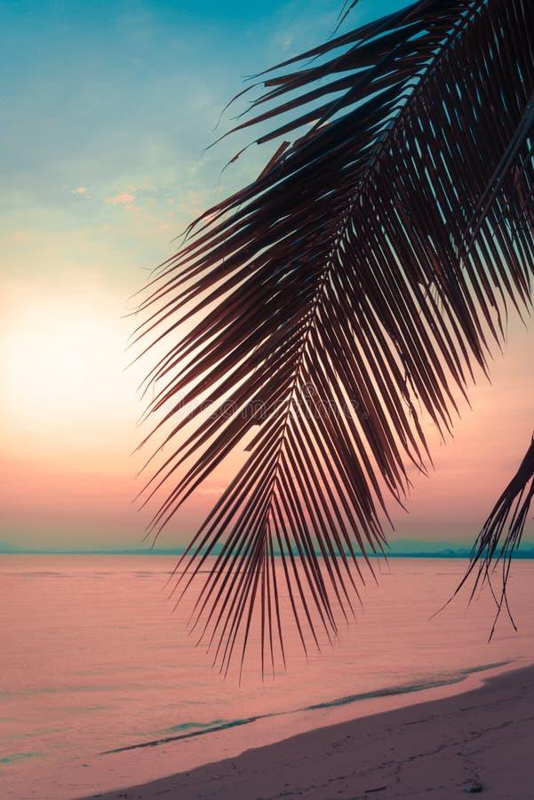 De palmen van de silhouetkokosnoot op strand bij zonsondergang stock fotografie