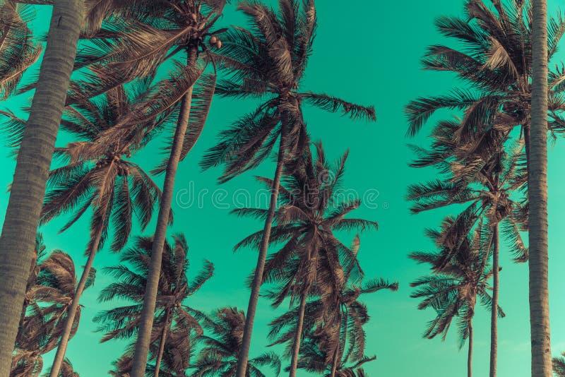 De palmen van de silhouetkokosnoot op strand bij zonsondergang royalty-vrije stock fotografie
