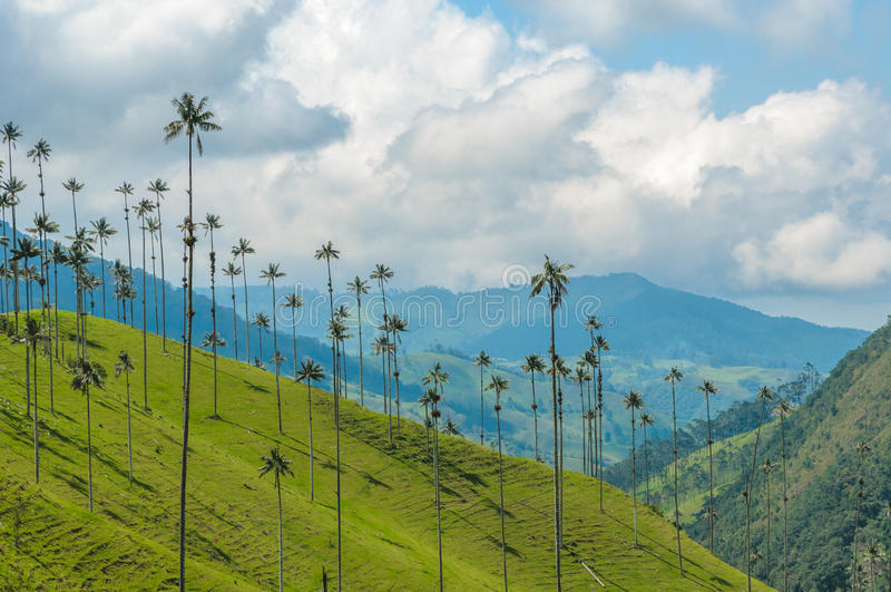 De palmen van de was van Cocora Vallei, Colombia royalty-vrije stock foto's