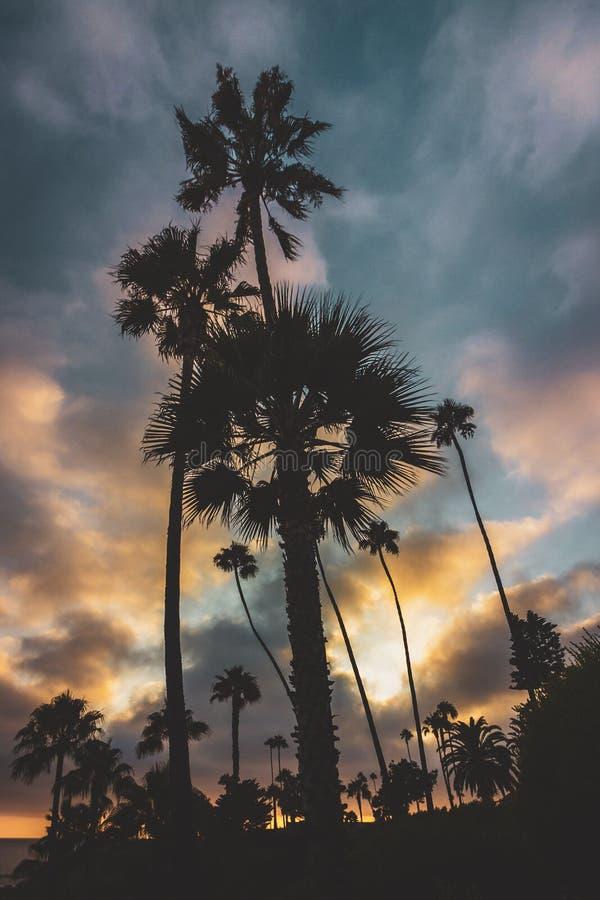 De Palmen van het Heislerpark stock fotografie