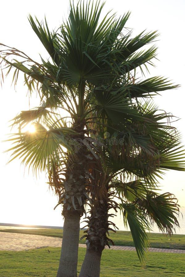 De palmen in zonnige dag stock afbeeldingen