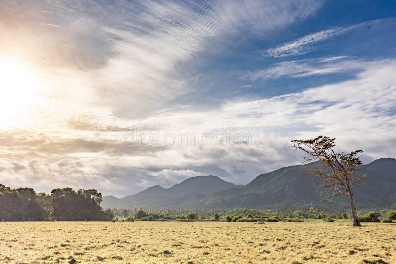 De panoramische mooie mening over weilandgebied en heuvels met eenzaam stierf boom Bewolkte blauwe hemel en geel droog gras op he stock foto