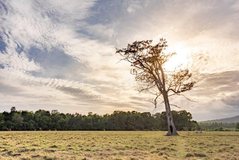 De panoramische mooie mening over weilandgebied en heuvels met eenzaam stierf boom Bewolkte blauwe hemel en geel droog gras op he stock afbeelding
