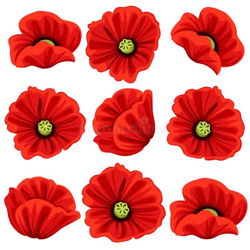 De papaver bloeit geplaatste pictogrammen De vector isoleerde botanische symbolen van bloeiende rode papaversbloesems Bloemenboek vector illustratie