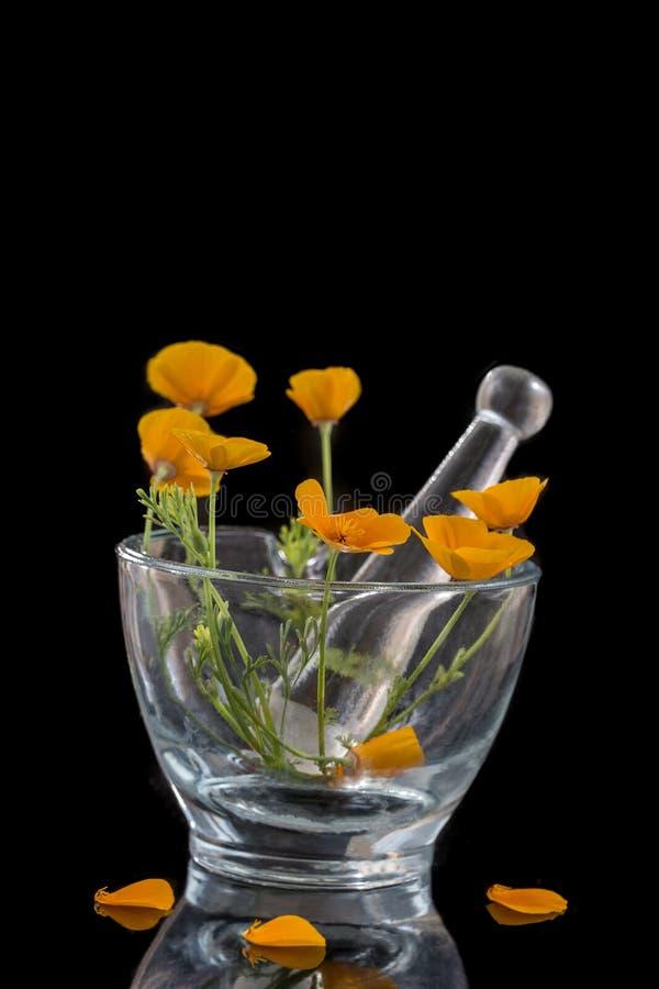 De papaver van Californië, Eschscholzia-californica in glasmortier, oranje bloem op zwarte achtergrond stock afbeelding