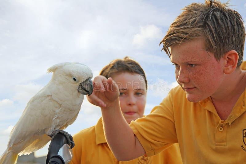 De papegaai bezoekt schooljonge geitjes stock foto's