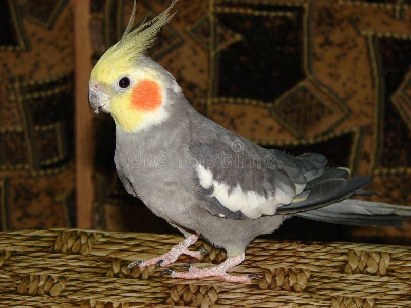 De papegaai is op de lijst stock foto's