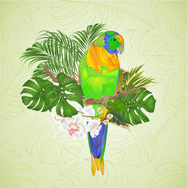De Papegaai tropische vogel die van zonconure zich op een tak witte orchidee Phalaenopsis bevinden op een witte vectorillustratie royalty-vrije illustratie