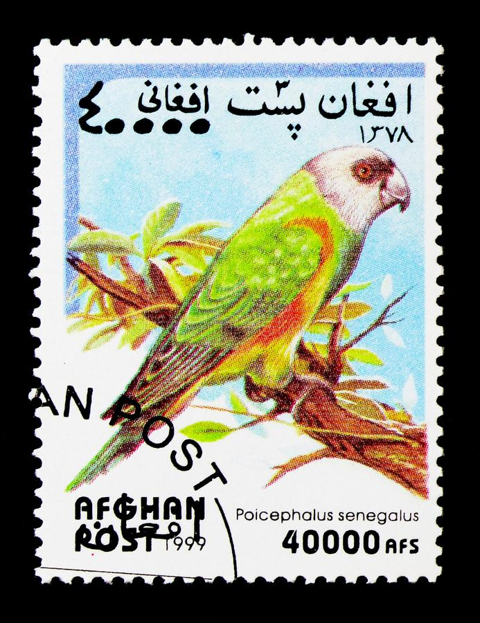 De Papegaai van Senegal (Poicephalus-senegalus), Papegaai serie, circa 1999 royalty-vrije stock afbeelding