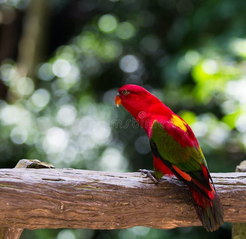 De papegaai is zo mooi royalty-vrije stock foto's