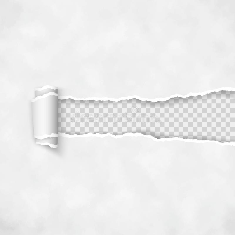 De papel rasgado com borda rolada Beira quebrada áspera da listra de papel Vetor ilustração do vetor