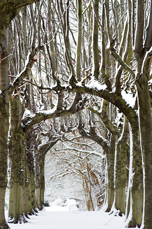 De parade van de sneeuw royalty-vrije stock foto's