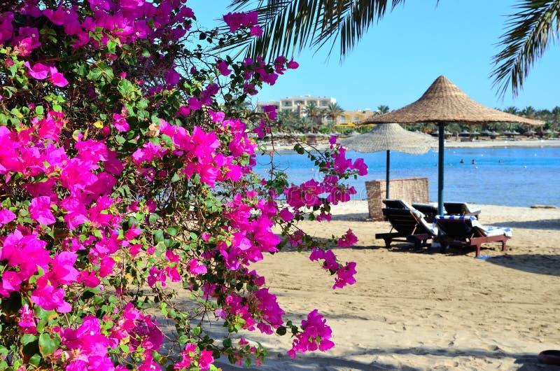 De paraplu van bougainvillea en van het strand royalty-vrije stock foto