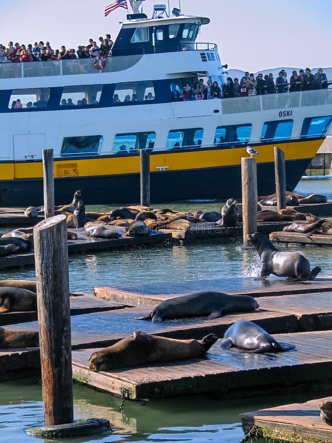 De passagiers van Blauwe Gouden Vlootveerboot Oski zien zeeleeuwen royalty-vrije stock fotografie