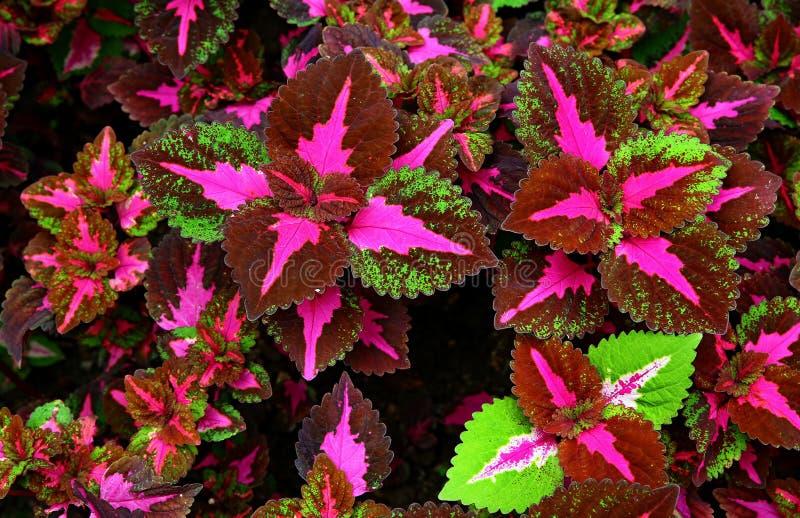 De pastelkleur tropische installatie van de sierneteltovenaar stock foto's