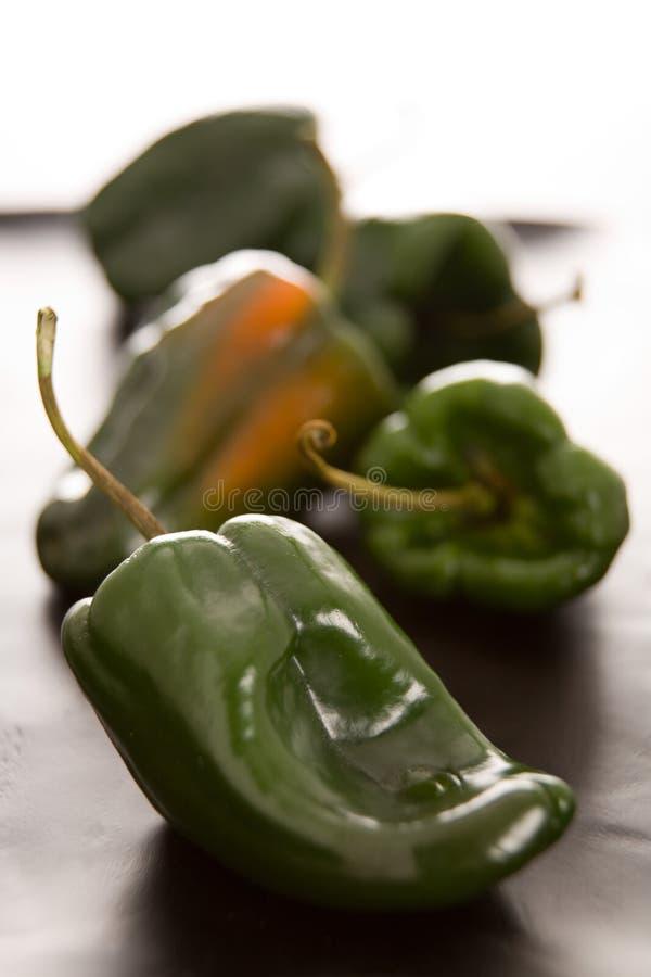 De peper van Poblano royalty-vrije stock foto's