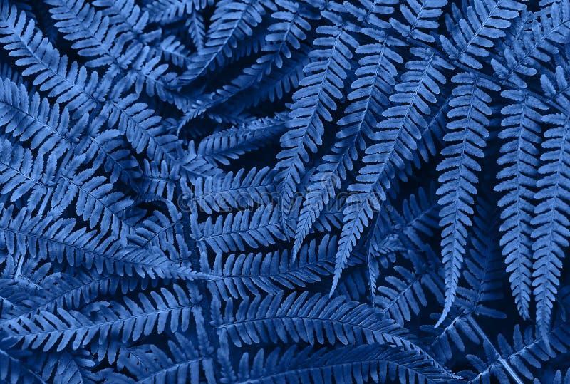 De perfecte natuurlijke jonge varen verlaat patroonachtergrond Blauwe donkere en humeurige achtergrond voor uw ontwerp Hoogste me stock foto's