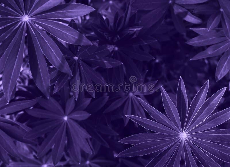 De perfecte natuurlijke verse achtergrond van het graspatroon Ultraviolette donkere en humeurige achtergrond voor uw ontwerp Hoog royalty-vrije stock foto's