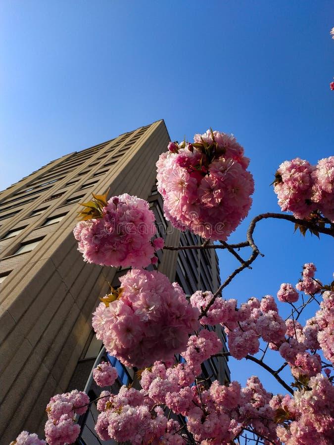 De perfecte unie tussen bloemen en architectuur royalty-vrije stock afbeelding