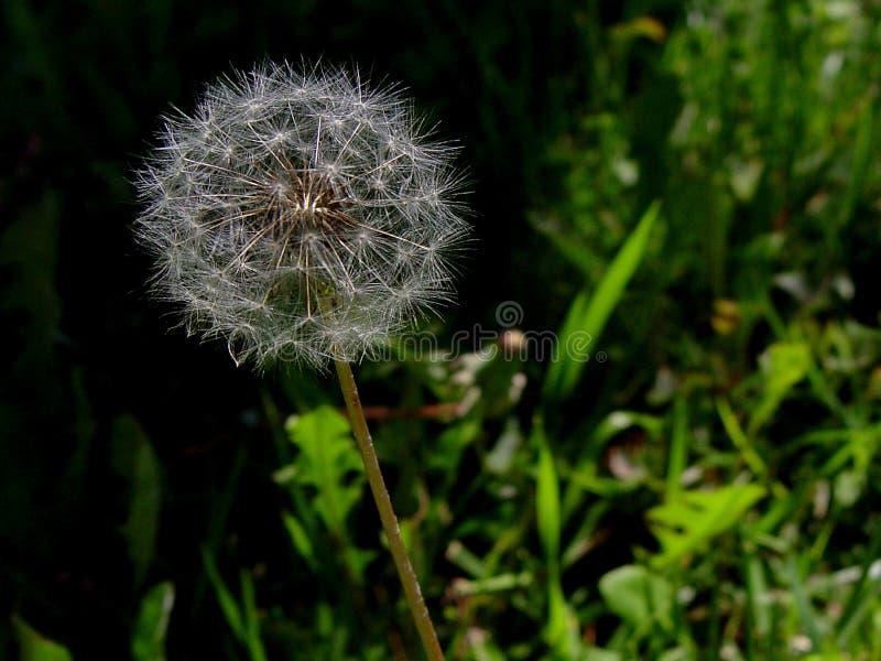 Download De Peul Van Het Zaad In Gras Stock Foto - Afbeelding bestaande uit groep, installatie: 281666