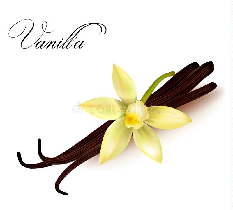 De peulen en de bloem van de vanille. royalty-vrije illustratie