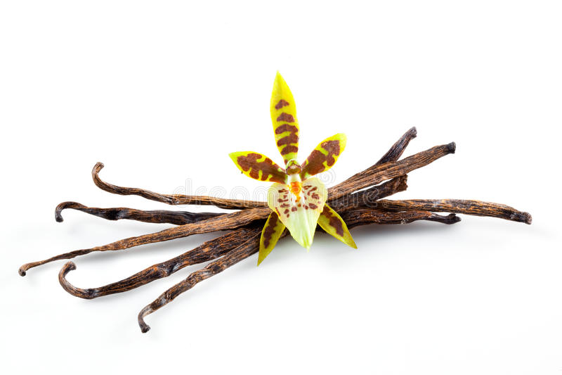 De Peulen en de Bloem van de vanille die op wit worden geïsoleerdr stock fotografie