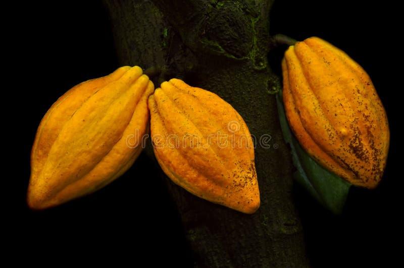 De Peulen van de cacao stock afbeelding