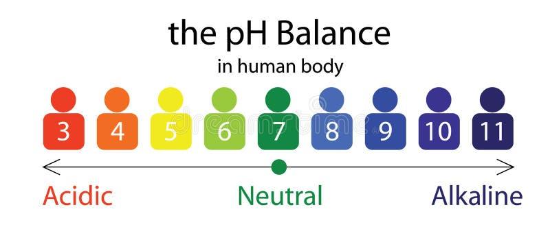 De PH grafiek van de saldoschaal in een menselijk lichaam stock illustratie