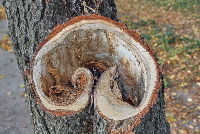 De pijler van de besnoeiingsboom Close-uphart gevormde plak royalty-vrije stock fotografie